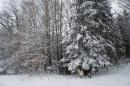 Winterbild zur Abkühlung (Mit Bärbel :3!)