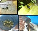 Was auf meinem Hof herumfleucht