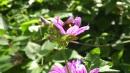 Frühlings-Fotowettbewerb