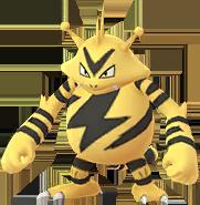Elektek in pok mon go - Pokemon elektek ...