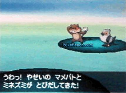 Minezumi auf einem Screenshot von Pokémon Schwarz/Weiß