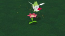 Shaymin |  | Shaymins Flugform in My Pokémon Ranch.