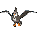 Staravia-Sprite (XY, normal, vorne)