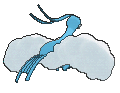 Altaria-Sprite (XY, normal, Rückseite)