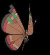Vivillon-Sprite (XY, normal, Rückseite)